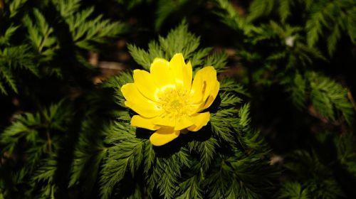 jeju island wildflower spring flowers