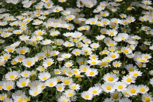 wildflower flowers wildflower close-ups