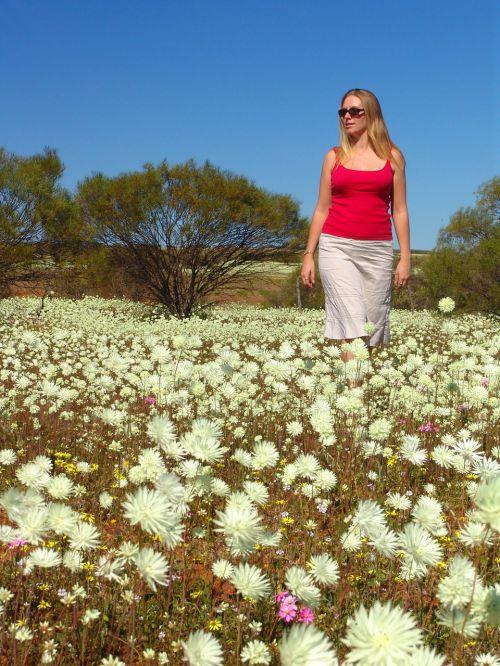 wildflowers australia outback