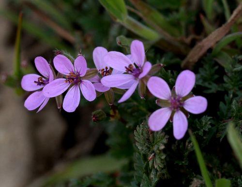 wildflowers mov small