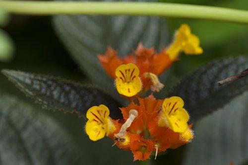 wildflowers  yellow  nature
