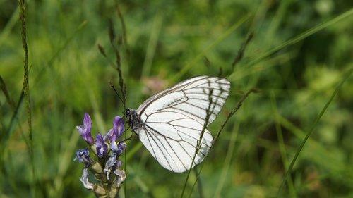 wildflowers  butterfly  flower