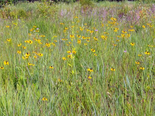 Wildflowers And Weeds