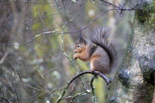 wildlife squirrel animal
