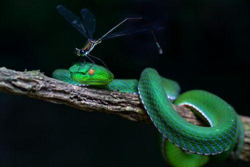 wildlife snakes record hue