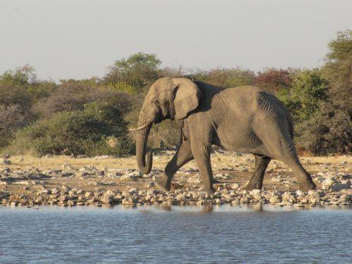 wildlife elephant namibia