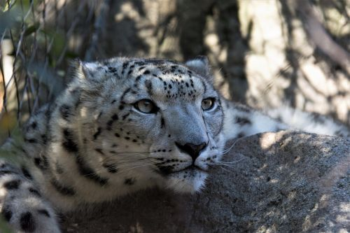 wildlife carnivore nature