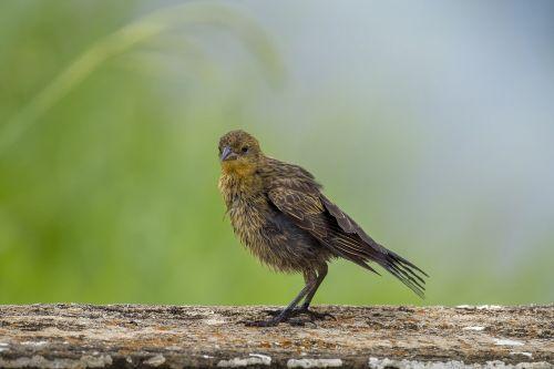 wildlife nature birds