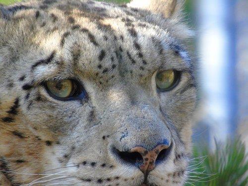 wildlife  cat  mammal