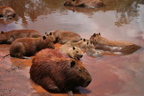 wildlife  mammal  water
