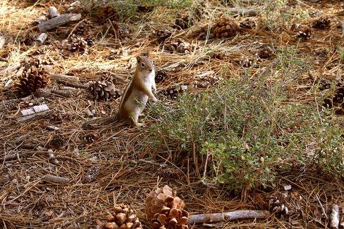 wildlife  squirrel  forest