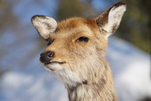 wildlife park doe free deer