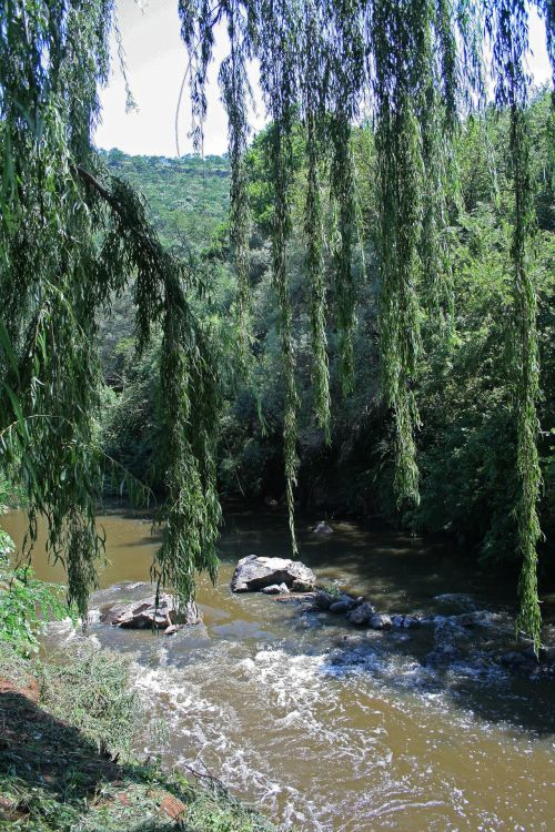 Willow Tree Over Flowing Water