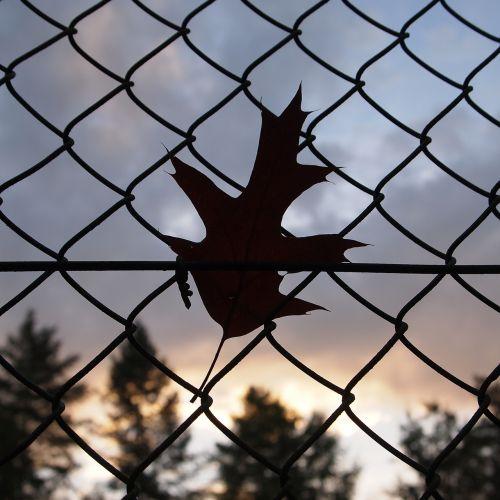 wind fence leaves