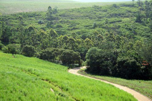 Winding Trail On Sugar Cane Estate