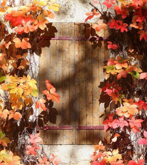 window shutter autumn leaves