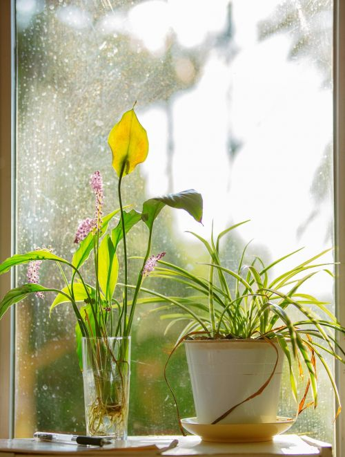 window flower orchid
