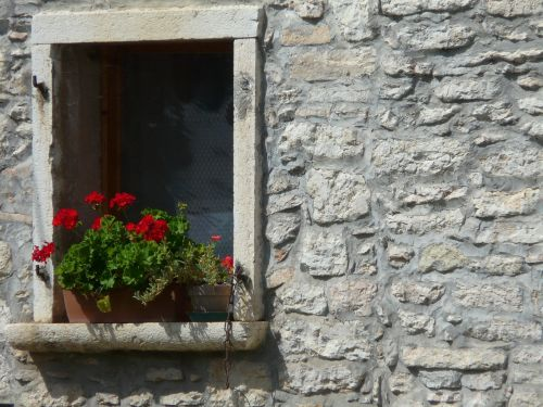 window flowers decor