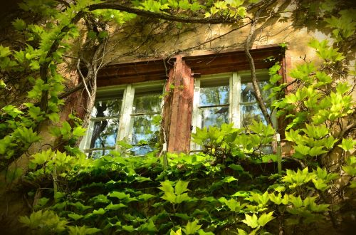 window old weathered