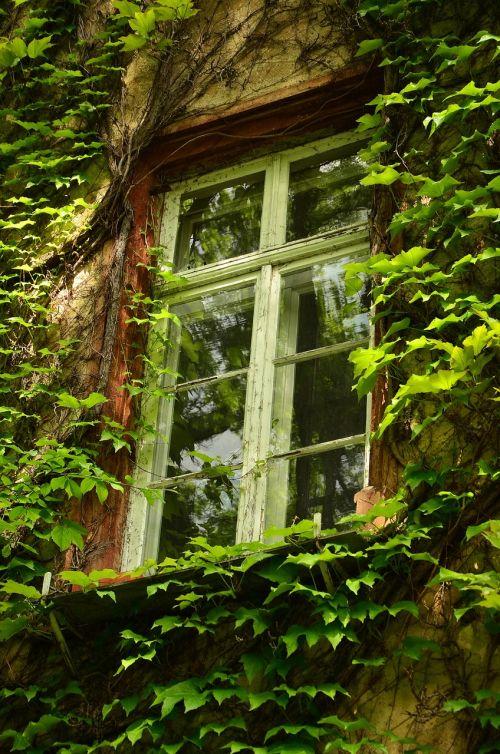 window old window aesthetic