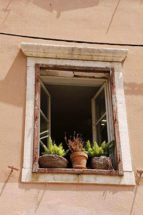 window plant old