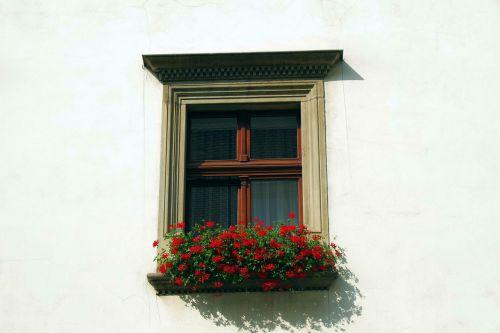 window shutters glass
