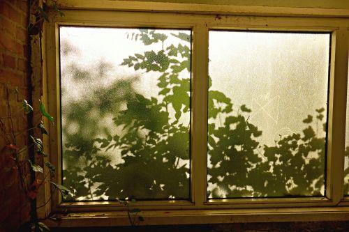 langas,stiklas,langas,matinis stiklas,saulės šviesa,šešėlis,lapai,modelis,struktūra,tekstūra,lapai,siluetas,šviesus