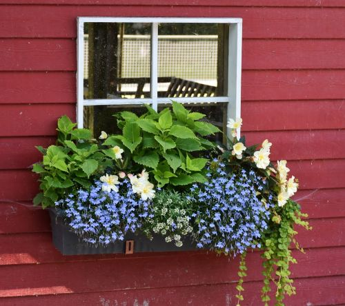 window flowers floral decorations