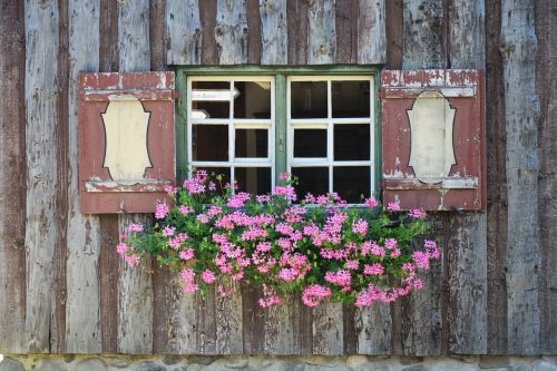 window window sill flowers