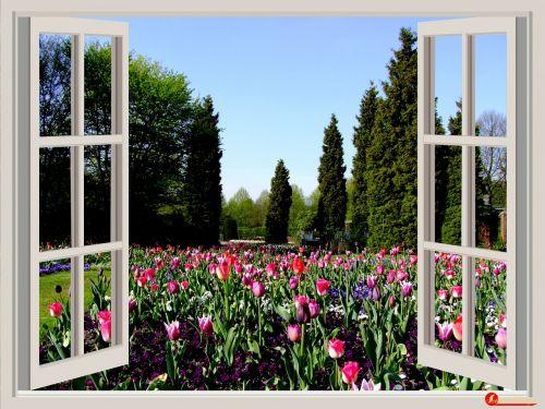 window flowers garden