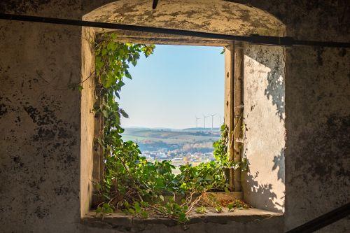 window ivy overgrown