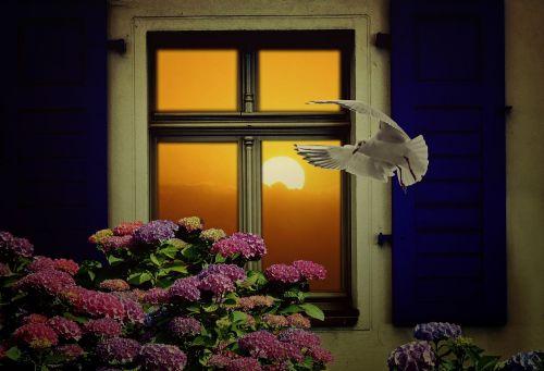 window sun still life