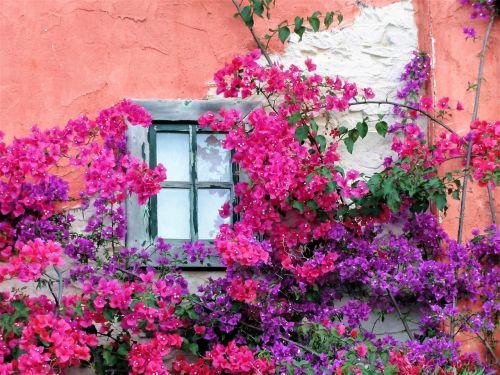window house facade hauswand