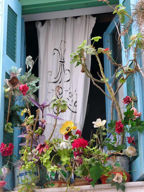 window plants colors