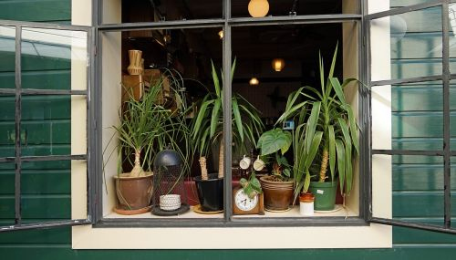 window decoration plant