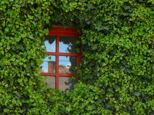 window amber glass