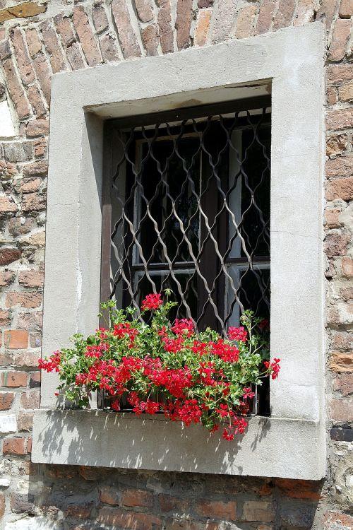 window trellis geraniums