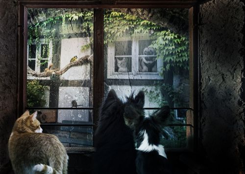 window animals dogs cat