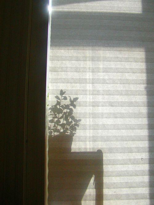 window blind shadow
