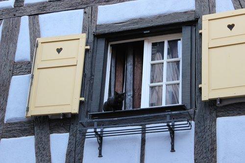 window  black cat  fachwerkhaus