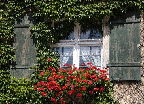 window  hauswand  ivy