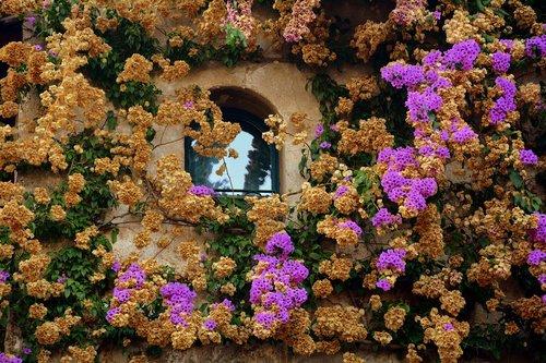 window  bloom  wall