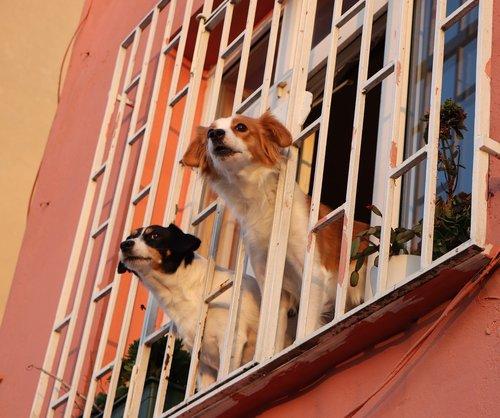 window  dog  dogs