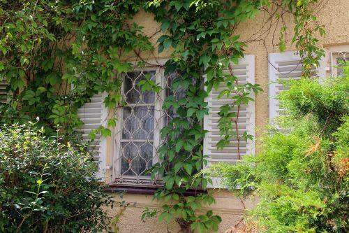 window ivy wine partner