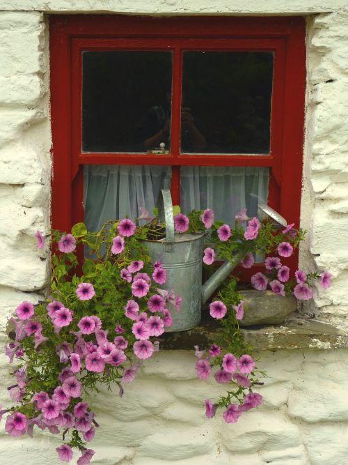 window flowers window frames