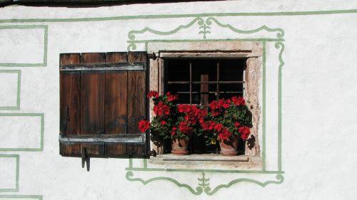 window flowers shutter