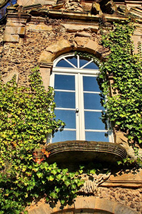 window ivy wall