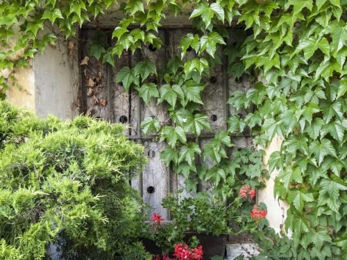window ivy wood shop