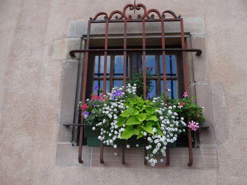 window grid flowers