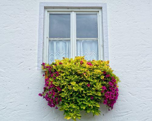 window flowers flower box